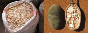 Baobabcomb